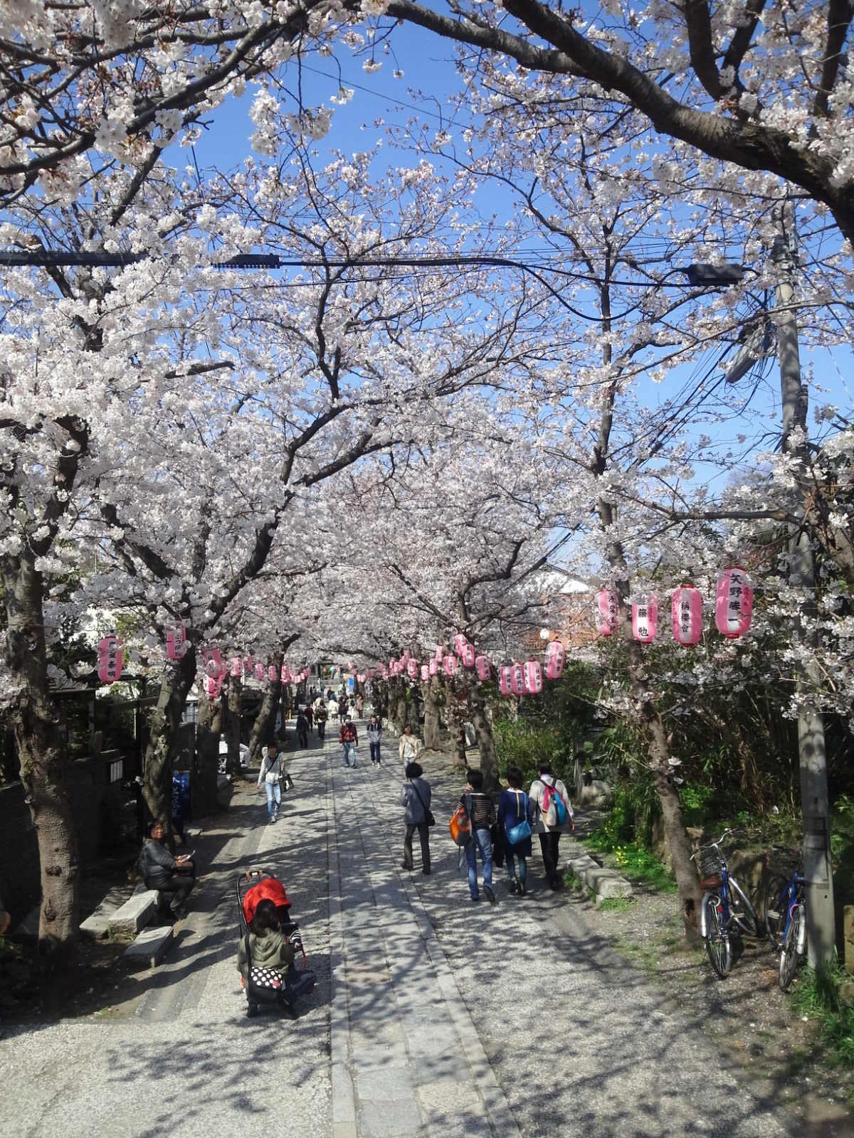 金沢文庫の桜